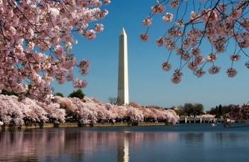 Washington-DC-Monument-cherry-blossom.jpg
